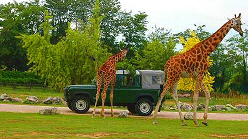 Hotel Vicino Zoo Safari Verona