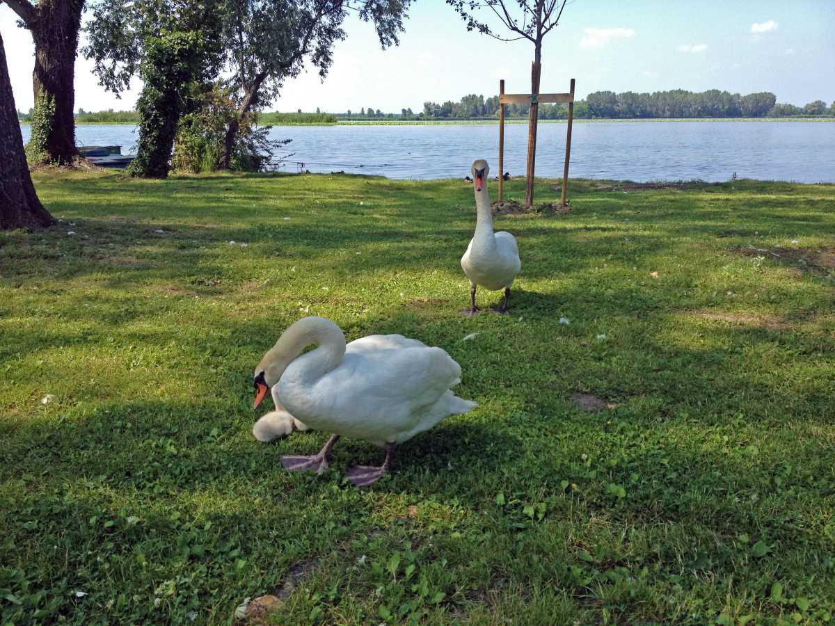 Passeggiare sul lungolago di Mantova con i bambini
